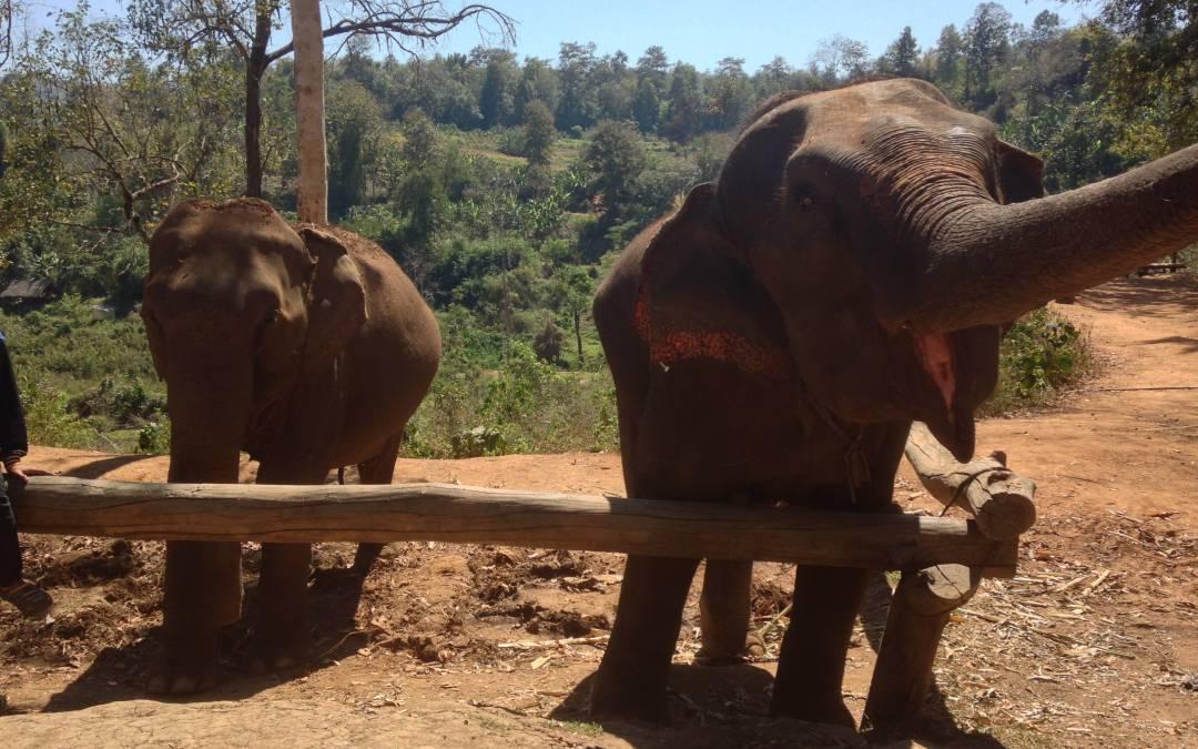 Eettinen iltapäivä elefanttien kanssa – Loolu Tour arvostelu